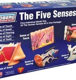 Lindberg (LND) The Five Senses Model kit