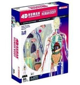 4D Vision (FDV) Visible Human Torso Anatomy Kit
