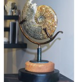 James Vilona Spinning Russian Ammonite sculpture