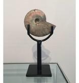 James Vilona Small Russian Ammonite
