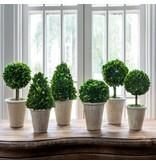 Park Hill Boxwood Topiary