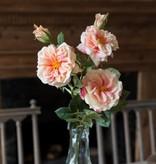 Park Hill Gathered Garden Roses Peach HY1231P