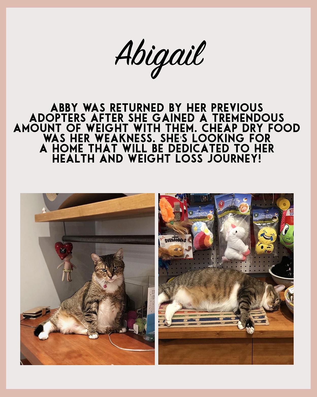 Adopt Abigail.