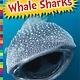 Amicus Ink Sharks: Whale Sharks [Ocean Creatures]
