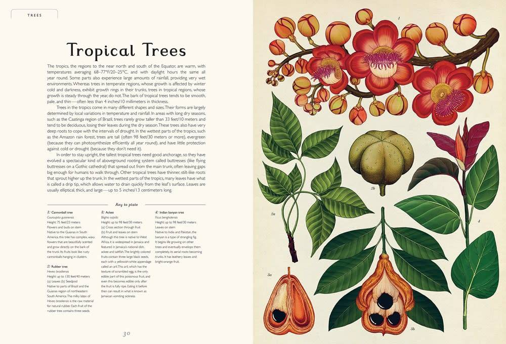 Big Picture Press Welcome to the Museum: Botanicum