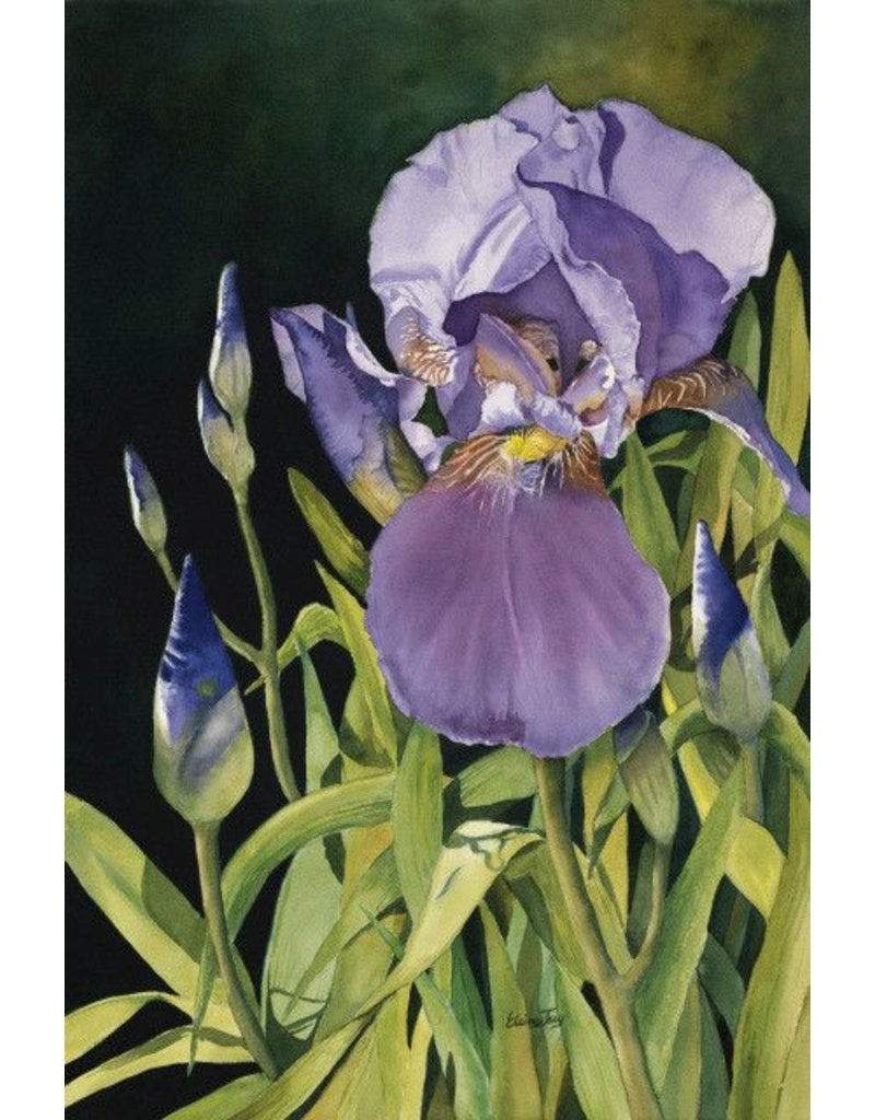 Elaine Jary Art Nancy's Iris