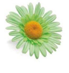 BAR PART ELECTRA DAISY FLOWER MINT