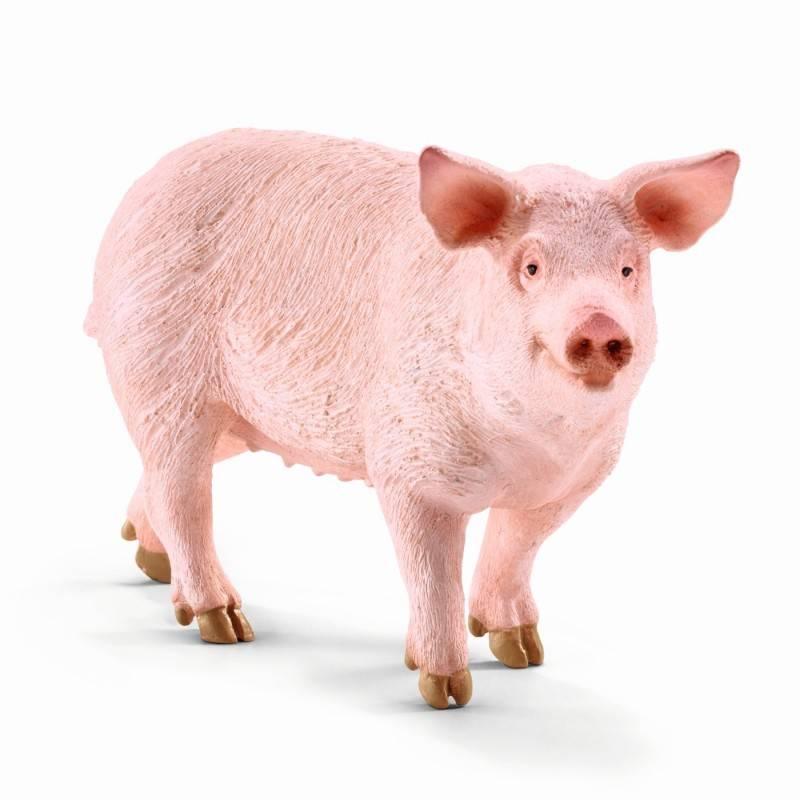 Chat pig com