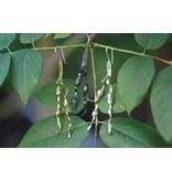 New England Seaweed Earrings - Alpaca (Oxidized) - Wire