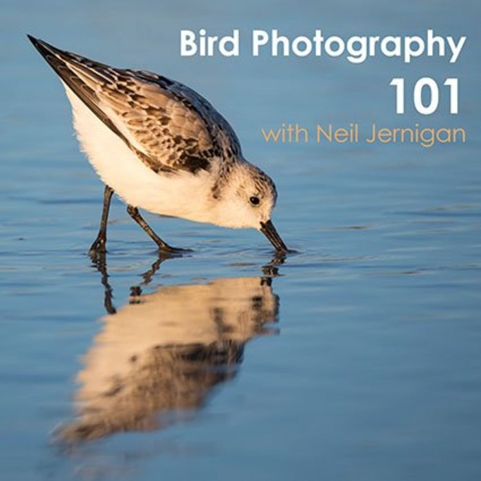 Bird Photography 101 Class (May 22, 2018)