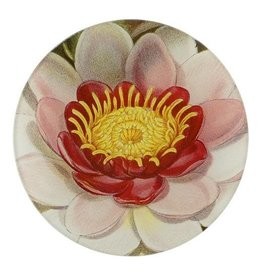 JOHN DERIAN John Derian's Rose Coloured Water Lily Plate