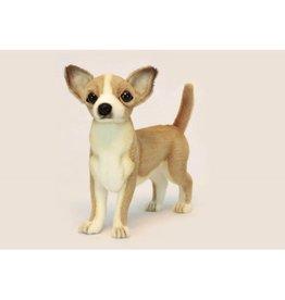 Chihuahua 11'' Hansa