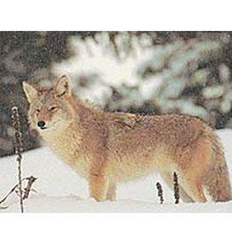 Delta Delta Coyote Target
