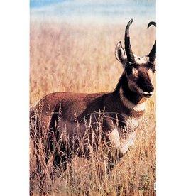 Martin Antelope Group 2 Target