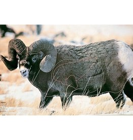 Martin Big Horn Sheep Group 1 Target