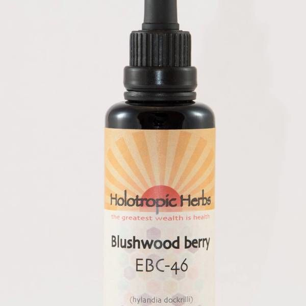 EBC-46 Blushwood Berry