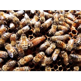 3lb PACKAGE of bees w/ Queen