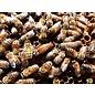 Medium Nucleus Colony of Honey Bees