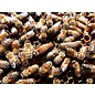 NUC, 5-Frame Med Nucleus Colony of Honey Bees