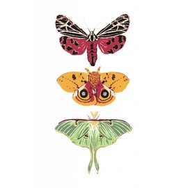 Moth Trio Card