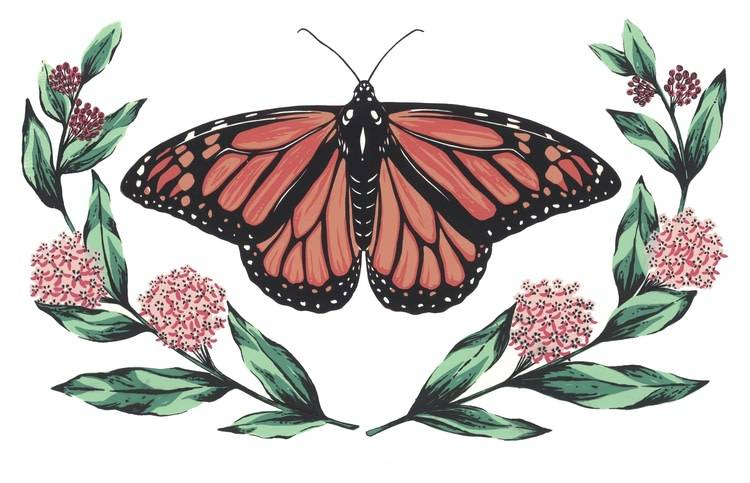 Monarch and Milkweed Card