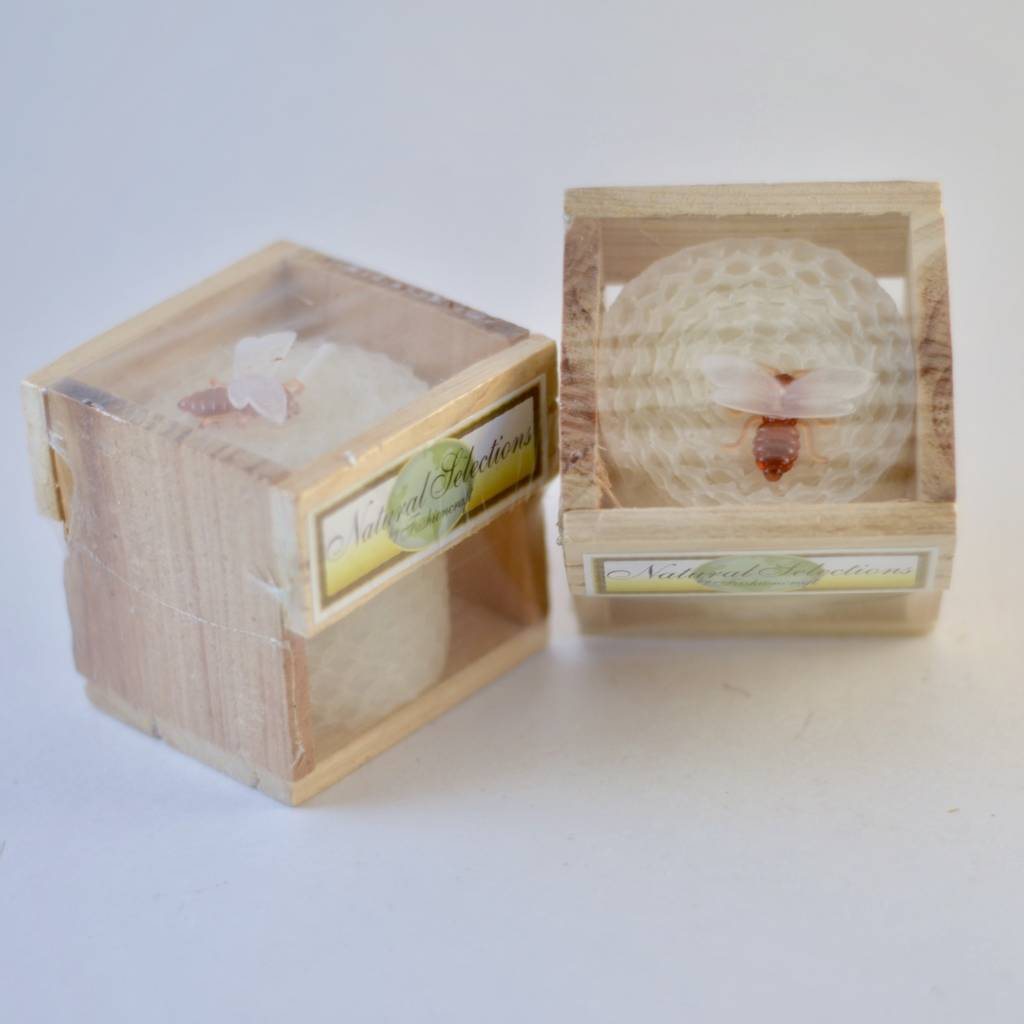 Candle in a Wood Box