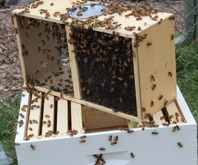 3lb PACKAGE of Bees with Queen