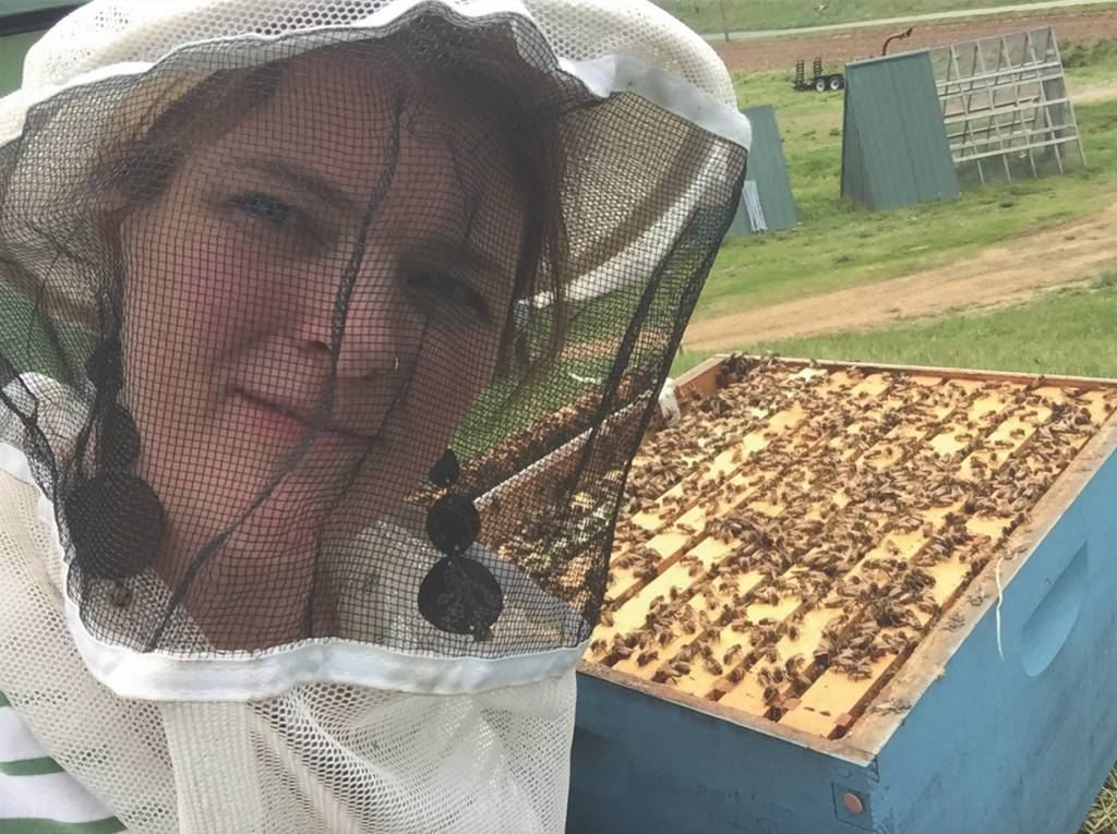 From the Hive: The Power of a Honeybee