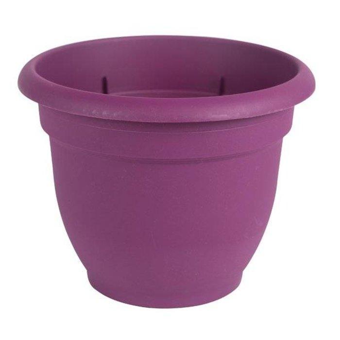 "Ariana Purple Pot 10"""