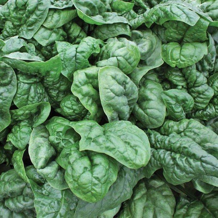 Spinach Avon Savoyed 4 Pk
