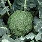 Broccoli Destiny 4 Pk