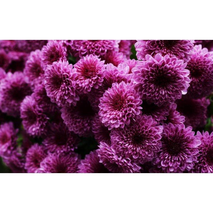 "Mum 8"" Purple/ Lav"