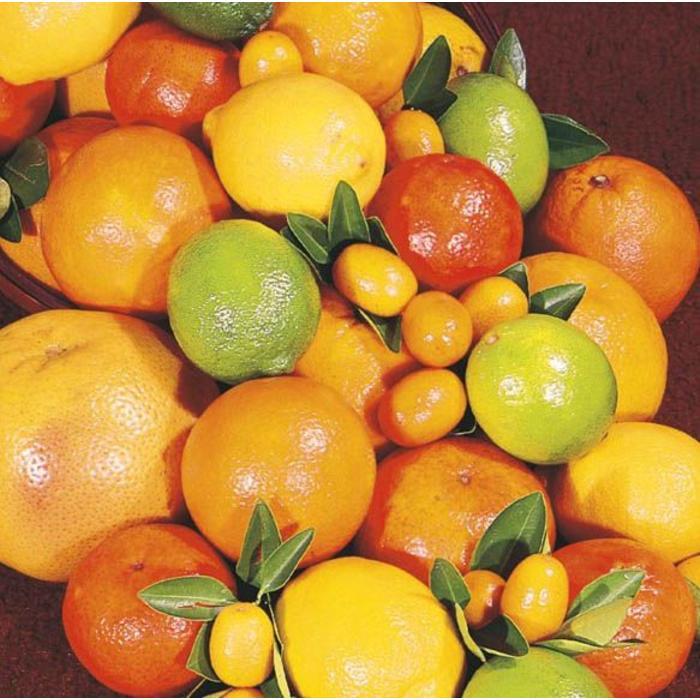 Citrus, Citrus Cocktail 1 Gal