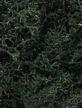 Woodland Scenics WOOL164 Lichen Bag, Dark Green/82 cu. in.