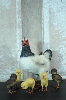 Farm Black & White Hen with Baby Chicks