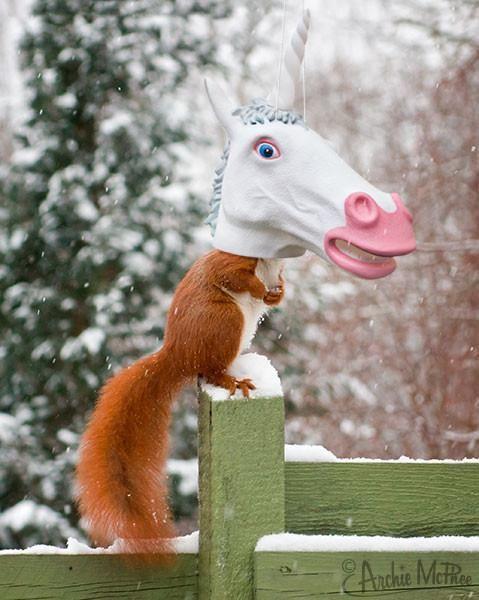 Accoutrements Unicorn - Big Head Squirrel Feeder