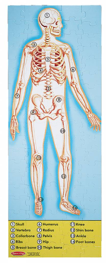 Human Anatomy Puzzle 100 Pc Learning Tree Educational