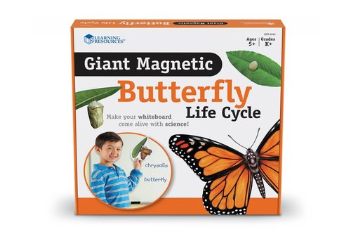 Learning Resources Giant Magnetic Butterfly Life Cycle