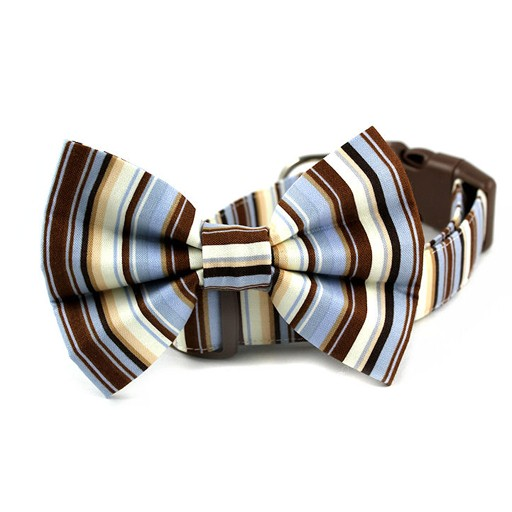 Bow Wow Couture Bow Wow Couture Mr. Bingly Collar
