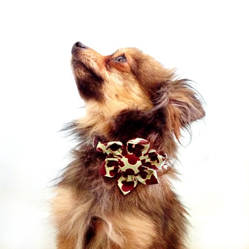 Bow Wow Couture Bow Wow Couture Barcelona in Chocolate Collar