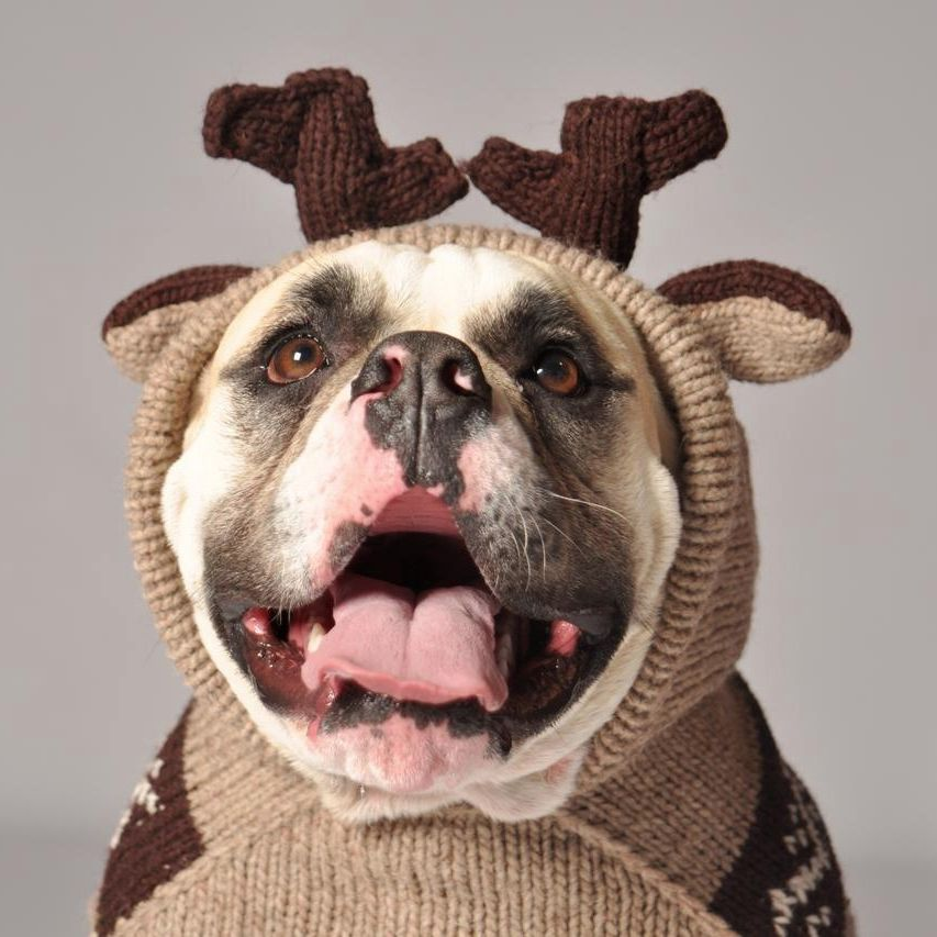 Chilly Dog Chilly Dog Moose Hoodie