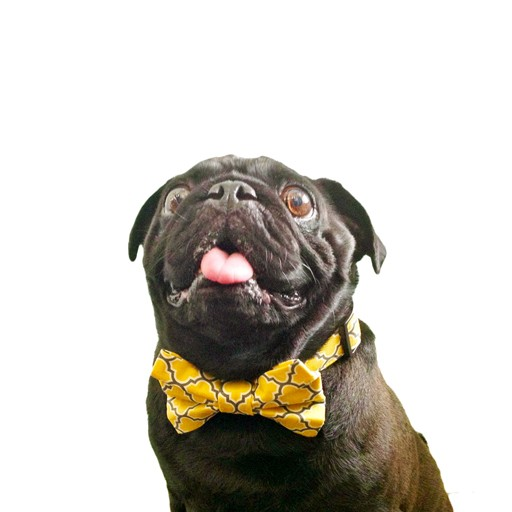 """Bow Wow Couture Bow Wow Couture Barcelona in Yellow Lead 1"""" x 5'"""