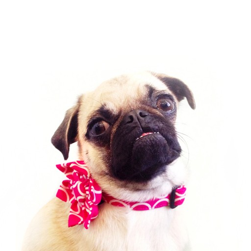 """Bow Wow Couture Bow Wow Couture Mod Dog in Pink Lead 3/4"""" x 5'"""