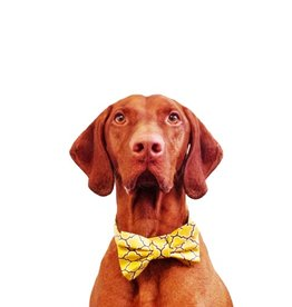 Bow Wow Couture Bow Wow Couture Barcelona in Yellow Bow Tie