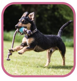 Beco Pets Beco Ball on Rope