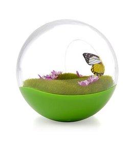 Petmate Petmate Butterfly Ball