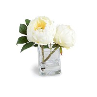 NEW GROWTH/TRANS EAST PEONY IN GLASS CUBE WHITE