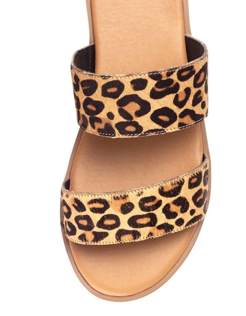 Yellow  Box Yellow Box Blasius- Leopard