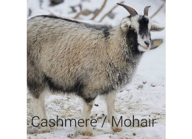 Cashmere/Mohair