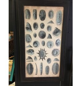 Beachcombed Framed Print